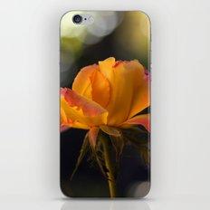 Rose Orient 1995 iPhone & iPod Skin