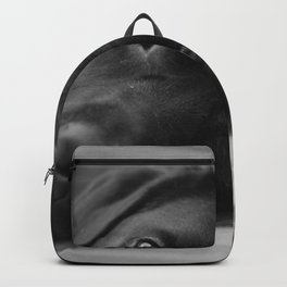 Dog Portrait Cute Black labrador Backpack