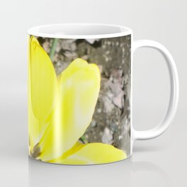Yellow Crocus Flowers Coffee Mug