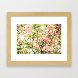 Spring Blossoms (1) Framed Art Print