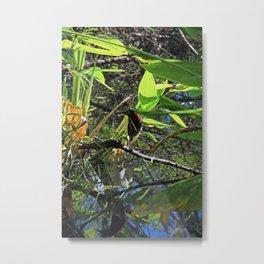 A Green Heron in Corkscrew-vertical Metal Print
