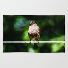 Perched bird Rug