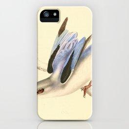 Halcyon senegaloides 1838 iPhone Case