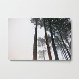 Cold Temperatures & Warm Light Metal Print