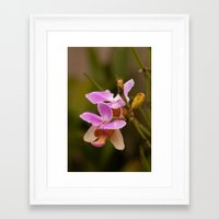 orchid Framed Art Prints featuring Orchid by Julio O. Herrmann
