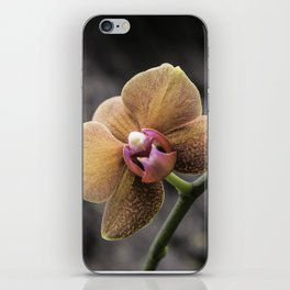 Orange Orchid iPhone Skin