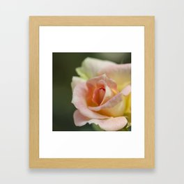 Flower Five Framed Art Print