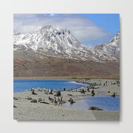 Fur Seals, King Penguins and Snowy Mountains Metal Print