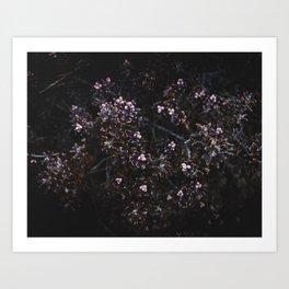 Wildflower Series - Mount Somers Art Print