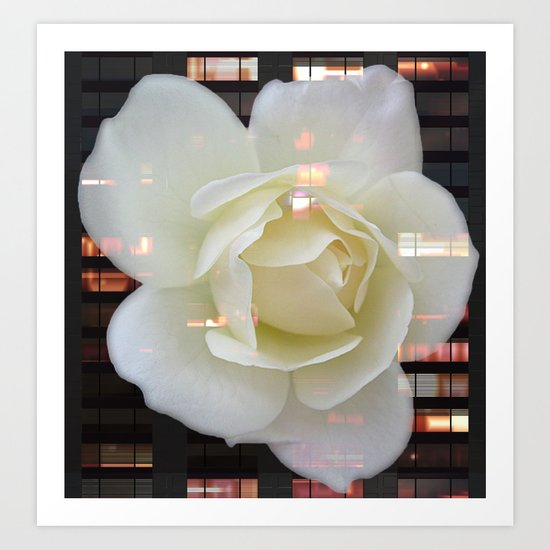 The Rose That Lives In The City Art Print