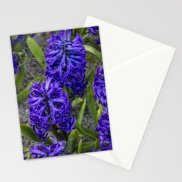Close-up of Beautiful, Deep Purple Hyacinths in Amsterdam, Netherlands Stationery Cards