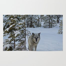 Lone wolf in the snow Rug