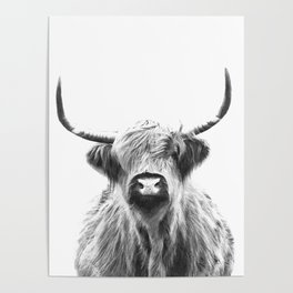 Black and White Highland Cow Portrait Poster