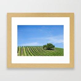 Oak Tree Amid The Grapevines Photograph By Priya Ghose  Framed Art Print