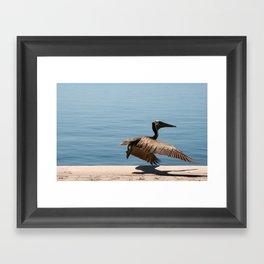 Pelican Take Off  Framed Art Print
