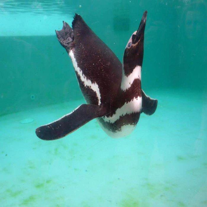 Penguin Swim Duvet Cover