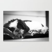 shih tzu Canvas Prints featuring Shih Tzu by Dayana Pessanha