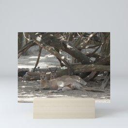 Kangaroos resting Mini Art Print