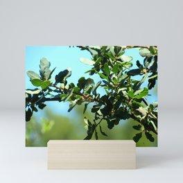Scrub Oak Branch Mini Art Print