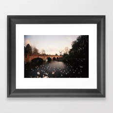 Swans #2 Framed Art Print