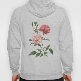 Rosa Semplerflorens Hoody
