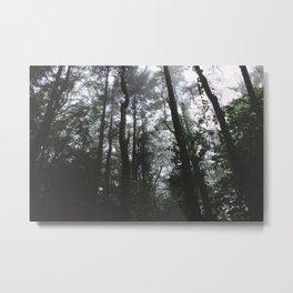 Forest Trail XXXVI Metal Print