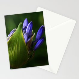 Newborn Lily of the Nile Flower Stationery Cards