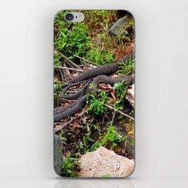 Copperheads iPhone Skin