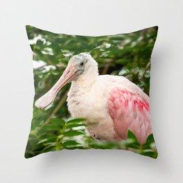 Wildlife Spoonbill Florida Bird Print Throw Pillow