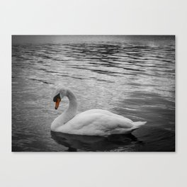 Swan in the Serpentine at Hyde Park Canvas Print