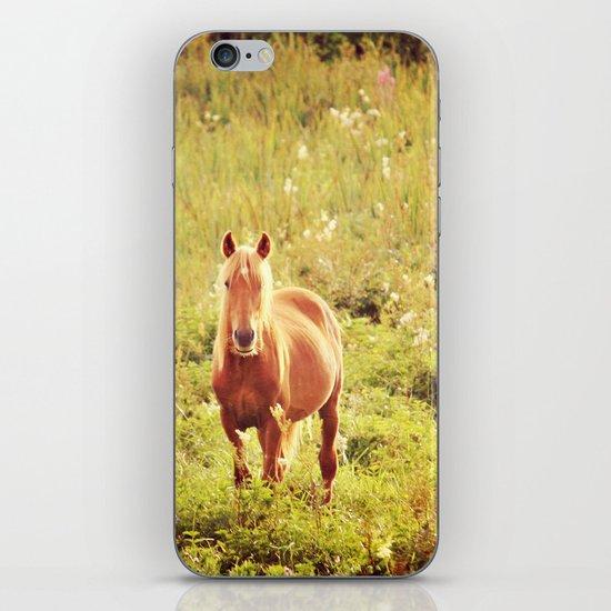 All the Pretty Horses iPhone & iPod Skin
