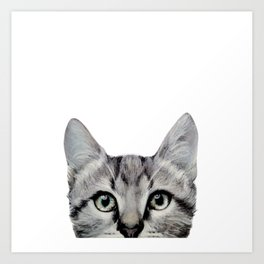 Cat, American Short hair, illustration original painting print Art Print