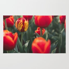 Red and Yellow Tulip Rug