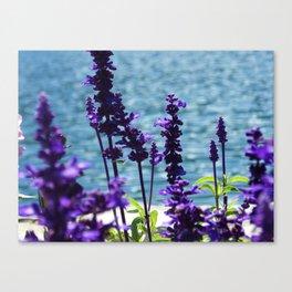 Violet Swiss Canvas Print