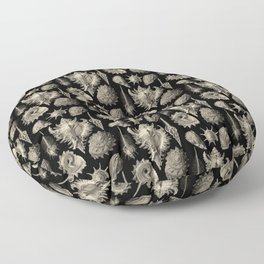 Ernst Haeckel Prosobranchia Sea Shells Floor Pillow