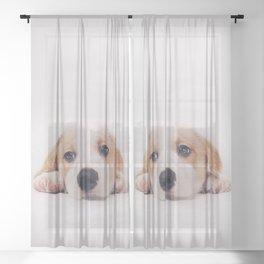 tired dog Sheer Curtain