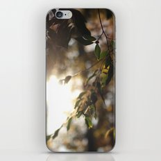 Leaves and Light iPhone & iPod Skin