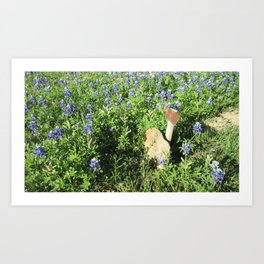 Lone Texas Grave, surrounded by Blue Bonnets Art Print
