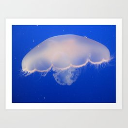 Medusozoa Art Print