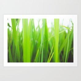 Summer is green Art Print