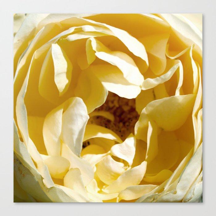 Closeup of Yellow Flower Canvas Print