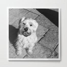 Pup Metal Print