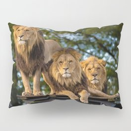 Lion Kings of the Serengeti, Africa Pillow Sham