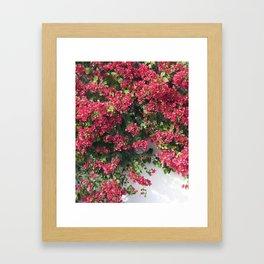 socal bougainvillea Framed Art Print