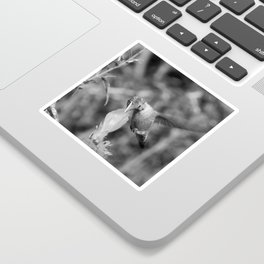 Hummingbird and the Flower- Black and White Sticker