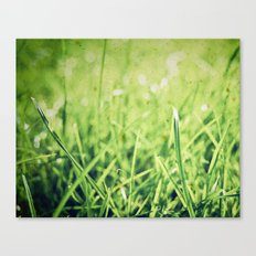 The grass isn't always greener on the other side! Canvas Print