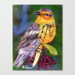 Bird Painting  - Warbler and Blossoms Canvas Print