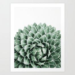 Succulent splendour Art Print