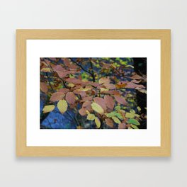 Autumnal Leaves Framed Art Print