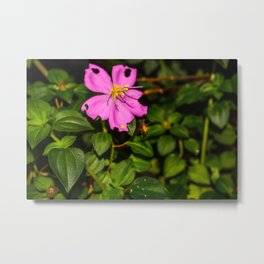 Pollination in Process Metal Print
